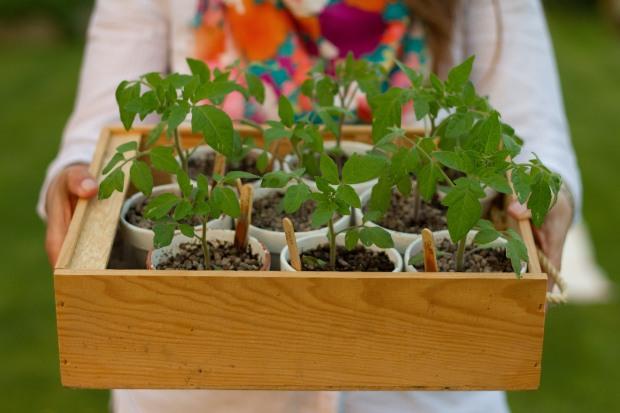 jardinagem6